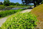 賀茂川堤;クリックすると大きな写真になります。