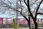 JR山陽貨物列車;クリックすると大きな写真になります