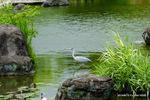 慶沢園内の池;クリックすると大きな写真になります。