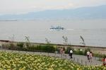 大阪湾の向こうは六甲山?:舞洲ゆり園;クリックすると大きな写真になります