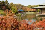 大仙公園日本庭園;クリックすると大きな写真になります。