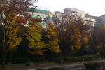 栂・美木多駅からの紅葉;クリックすると大きな写真になります