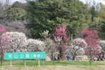 荒山公園入り口;クリックすると大きな写真になります