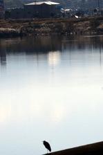 大阪狭山池;クリックすると大きな写真になります