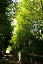 竹林:松尾寺;クリックすると大きな写真になります。