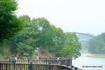 鯉釣りをする人たち;クリックすると大きな写真になります。