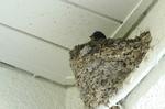 ツバメの巣:クリックすると大きな写真になります