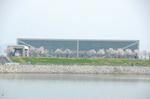 狭山池博物館に近い遊歩道桜並木: クリックすると大きな写真になります