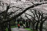 桃山台小学校横;クリックすると大きな写真になります