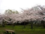 原山台公園付近;クリックすると大きな写真になります
