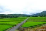 棚田の向こうに、大山が見えるはずだが;クリックすると大きな写真になります。