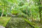 山門への石段:高源寺;クリックすると大きな写真になります。