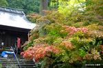 色づいた楓:大国寺;クリックすると大きな写真になります。