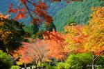 境内の紅葉:高源寺(丹波);クリックすると大きな写真になります。