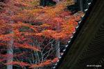多宝塔裏の楓:高源寺(丹波);クリックすると大きな写真になります。