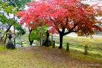 神社の南境内:養父神社(兵庫);クリックすると大きな写真になります。