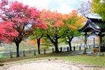>神社には、土俵もある:養父神社(兵庫);クリックすると大きな写真になります。