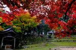 境内の紅葉:養父神社(兵庫);クリックすると大きな写真になります。