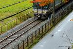 楓の下を列車が:養父神社(兵庫);クリックすると大きな写真になります。
