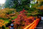 渡り橋脇の紅葉:養父神社(兵庫);クリックすると大きな写真になります。