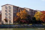 ケヤキの紅葉:桃山台B団地;クリックすると大きな写真になります。