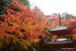 多宝塔:大威徳寺(岸和田);クリックすると大きな写真になります。