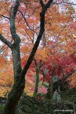 境内:大威徳寺(岸和田);クリックすると大きな写真になります。