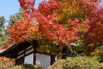 拝殿あたりの紅葉:観心寺;クリックすると大きな写真になります。
