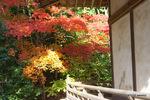 牛滝堂裏の紅葉:観心寺;クリックすると大きな写真になります。