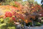 阿弥陀堂あたりの紅葉:観心寺;クリックすると大きな写真になります。