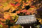 弁天堂あたりの紅葉:観心寺;クリックすると大きな写真になります。