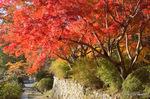 開山堂横から中院門あたりの紅葉:観心寺;クリックすると大きな写真になります。