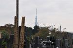 寛永寺霊園からみるスカイツリー;クリックすると大きな写真になります