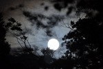 樹木の間から満月が;クリックすると大きな写真になります