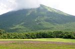 コスモスの向こうに大山;クリックすると大きな写真になります」