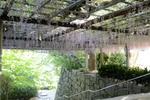 見事な藤棚:唐津城;クリックすると大きな写真になります