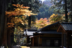花園神社境内の紅葉;クリックすると大きな写真になります