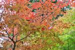 金剛峯寺近くの紅葉;クリックすると大きな写真になります