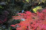 花貫渓谷の紅葉:クリックすると大きな写真になります