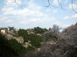 如意輪寺近くから見た中千本;クリックすると大きな写真になります
