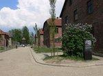 ポプラの並木が植え替えられた第1収容所;クリックすると大きな写真になります