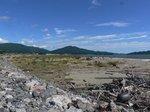 """7万本の松原が津波に襲われ、たった1本残った松も枯れてしまった。;クリックすると大きな写真になります。"""""""