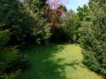 庭の小さな森:クリックすると大きな写真になります