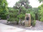 目玉の石と松の木;クリックすると大きな写真になります