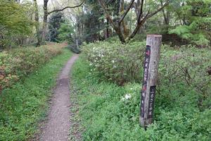 018)200422076 X800 武蔵嵐山 菅谷館跡 RX10M4.jpg