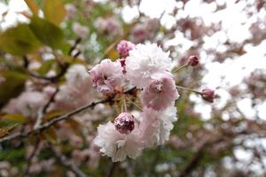 040)200422173 X800 武蔵嵐山 鎌形八幡神社 RX10M4.jpg