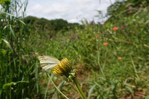 008)200525067 X800 舞岡公園 RX10M4.jpg