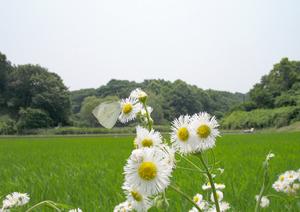 20404)060629006 X800 ◎舞岡公園 A620.jpg