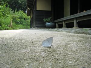 30107)100814006 X800 ◎舞岡公園 IXY900IS.jpg