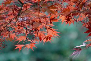 039)200422159 X800 〇武蔵嵐山 鎌形八幡神社 RX10M4.jpg